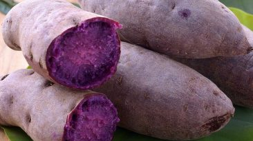 Beni Imo Okinawa's Famous Purple Sweet Potato Superfood
