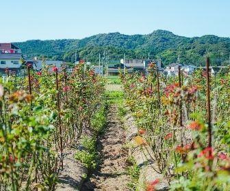 Shimane farm scenery