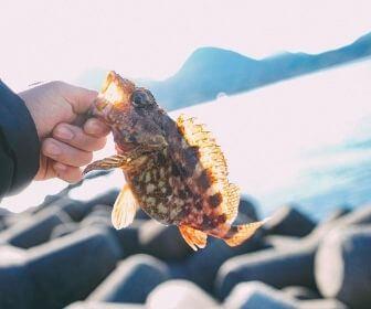 freshly caught fish in shimane