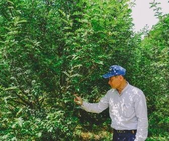man in front of the sansho pepper farm