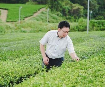 picking up tea leaves