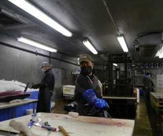 Men working with fish in the warehouse