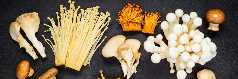 different mushrooms