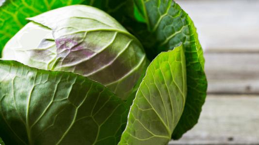 march cabbage broccoli